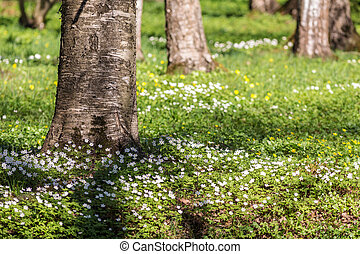 spring flowers in the grass