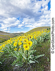 Spring flowers in the hills with blue sky