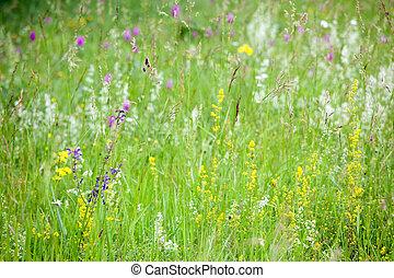 spring flowers in wild meadow