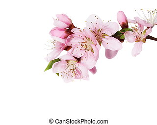 Spring flowers isolated on white
