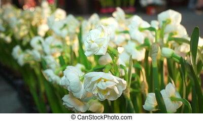 Spring flowers morning