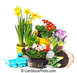 spring flowers narcissus, crocus, tulip, hyacinth and...