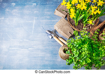 Spring flowers narcissus top view garden tool