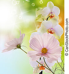Spring flowers on a morning abstract beautiful nature background