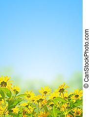 Spring flowers on blue sky