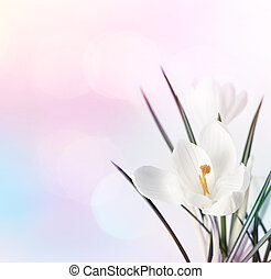 Spring flowers on blur soft background.