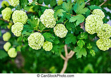 Spring flowers on branch with green leaves