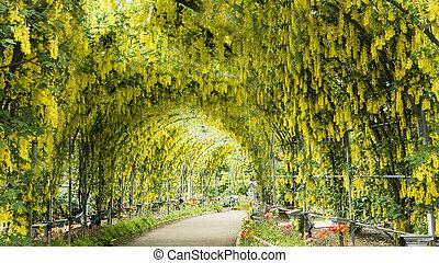 Spring flowers series, wisteria trellis in garden - The...
