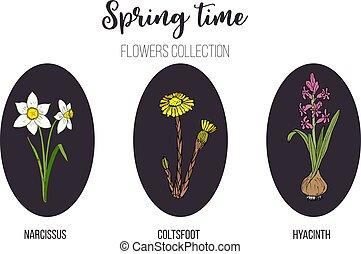 Spring flowers set coltsfoot, hyacinth, narcissus. Hand drawn botanical vector illustration
