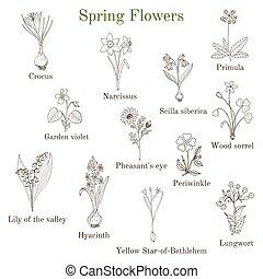 Spring flowers set