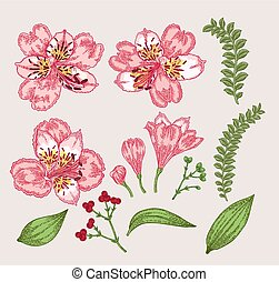 Spring flowers set. Hand drawn alstroemeria flowers and...