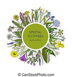 Spring flowers set. Hand drawn botanical vector illustration