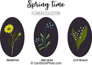 Spring flowers set lily-of-the-valley, pheasant eye, forget-me-not