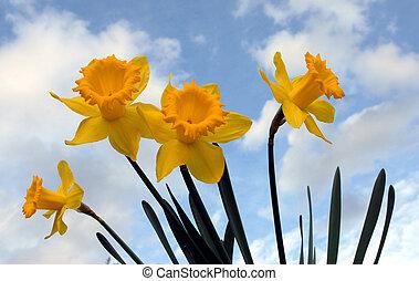 spring flowers - yellow spring flowers