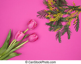 Spring flowers tulips and Mimosa on a pink background.
