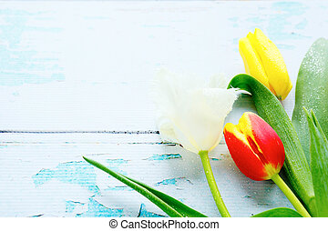 spring flowers - tulips on old boards