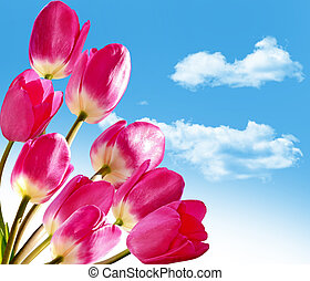 Spring flowers tulips on the background of blue sky with clouds