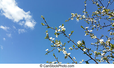 Spring flowers with blue background and clouds