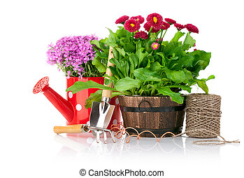 spring flowers with garden tools isolated on white...