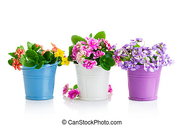 spring flowers with green leaves in bucket isolated on white background