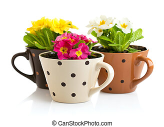 spring flowers with green leaves in pot