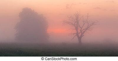 Spring foggy morning