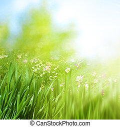 Spring foliage with daisy flowers, beauty natural backgrounds