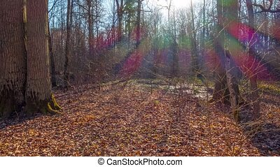 Spring forest and sun, tilt time-lapse