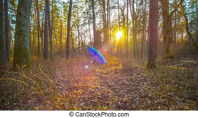 spring forest and the sun, time-lap