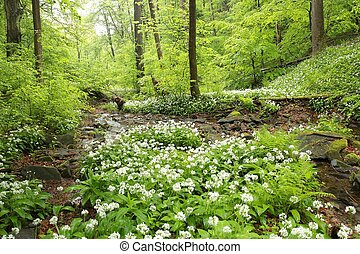 Spring forest in May