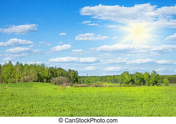 spring forest in sunny day