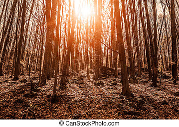 Spring forest in the rays of sunlight.