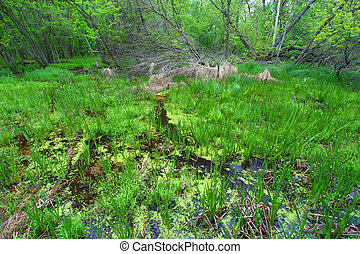 Spring Forest Landscape Illinois