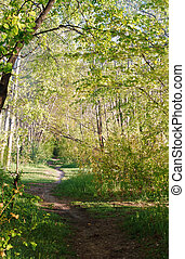 spring forest landscape, trail in the spring forest