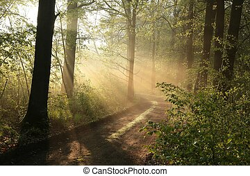Spring forest on a May morning