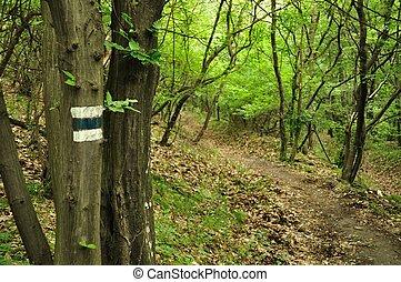 Spring forest scene