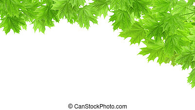 Spring frame with leaves of a maple