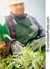 Spring garden concept. Male is doing garden work in herb ...