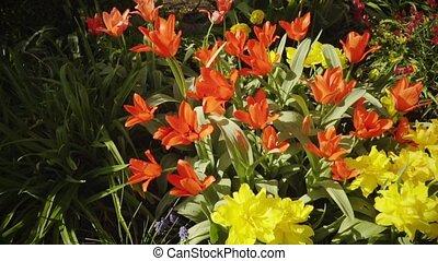 Spring, garden, flowers 1