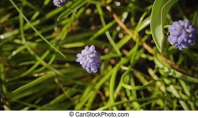 Spring, garden, flowers 2