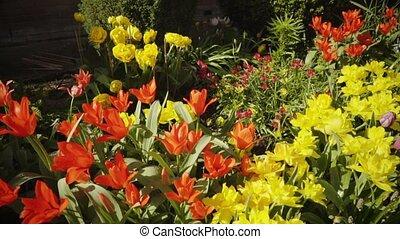 Spring, garden, flowers