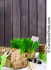 Spring garden. Green grass, organic pots, tools, pruner on wooden background with copy space, retro style