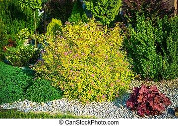 Spring Garden Plants