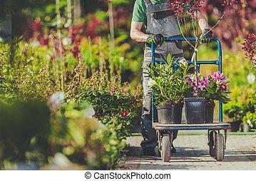 Garden Plants Shopping