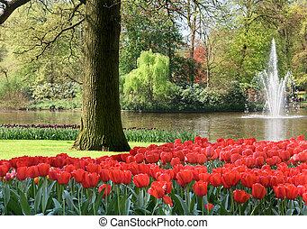 spring garden - Red tulips in park at springtime