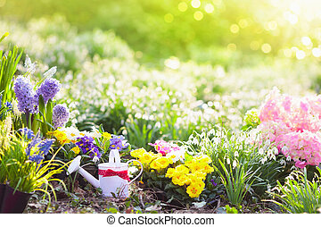 Spring garden with flowers. Gardening tools.