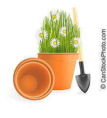 Spring Gardening. Chamomile flowers with green grass in flower pot