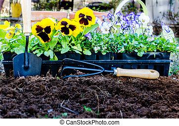 Spring Gardening - Spring gardening. Pots of daisies and...