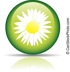 Spring - Glossy camomile in green circle isolated on white
