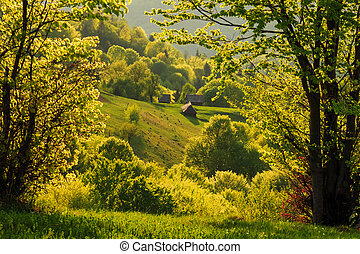 Spring gold evening landscape in the Carpathian mountains
